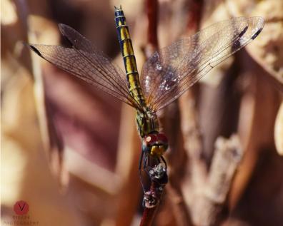 Dragonfly Poem